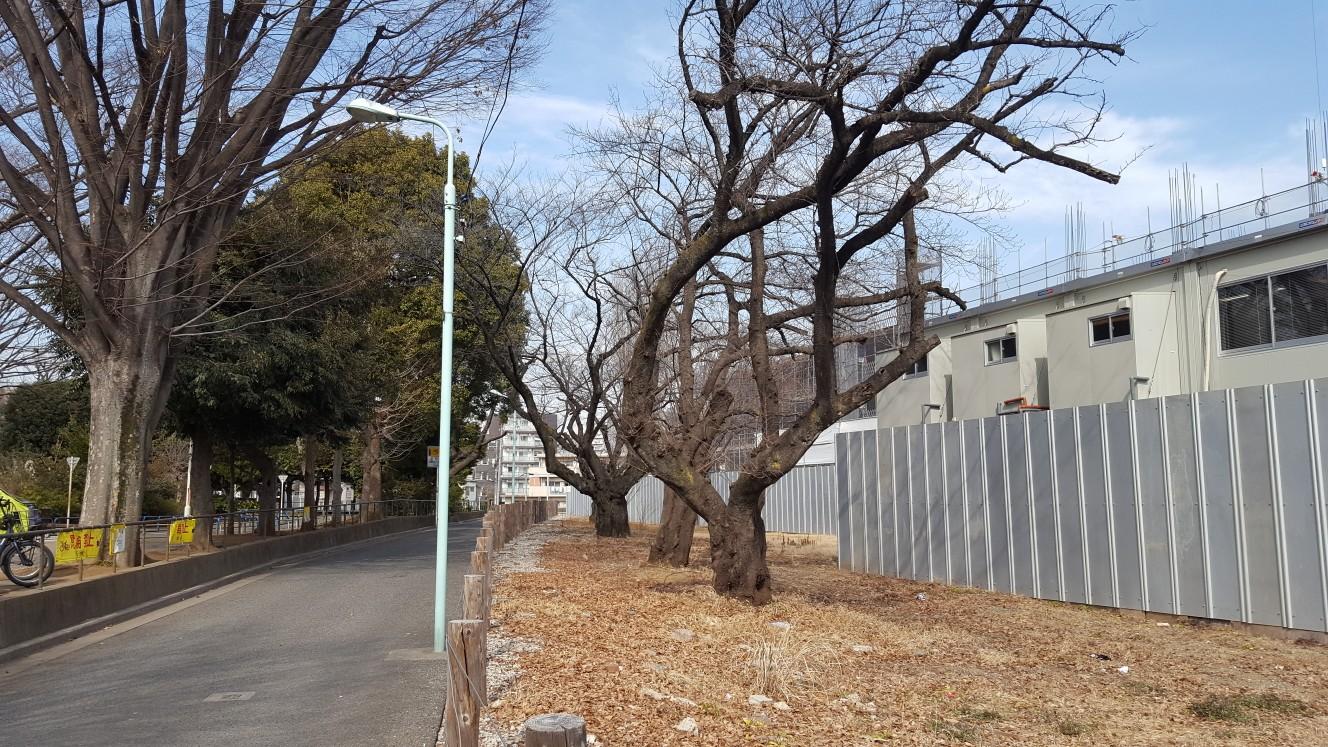 交通公園とマンション境目